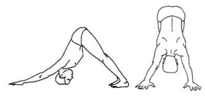 sobaka  Зимние виды спорта и йога: йога и лыжи йога зимой