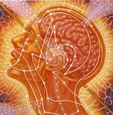 yogi brain  7 способов улучшить возможности своего мозга этой весной: питание для работы мозга образ жизни аюрведа
