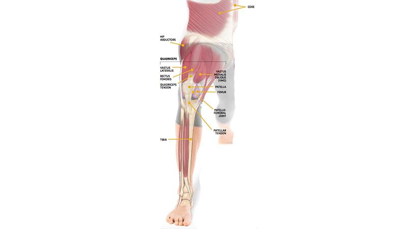 knee  Бережем колени: включаем в работу правильные мышцы: отстройка колени йога здоровье коленей анатомия йоги
