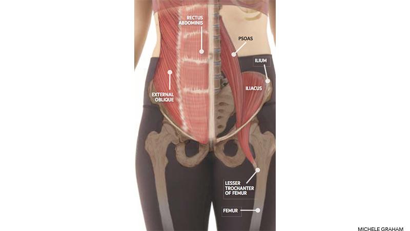 psoas  Йога анатомия: как вытянуть и укрепить  поясничную мышцу: