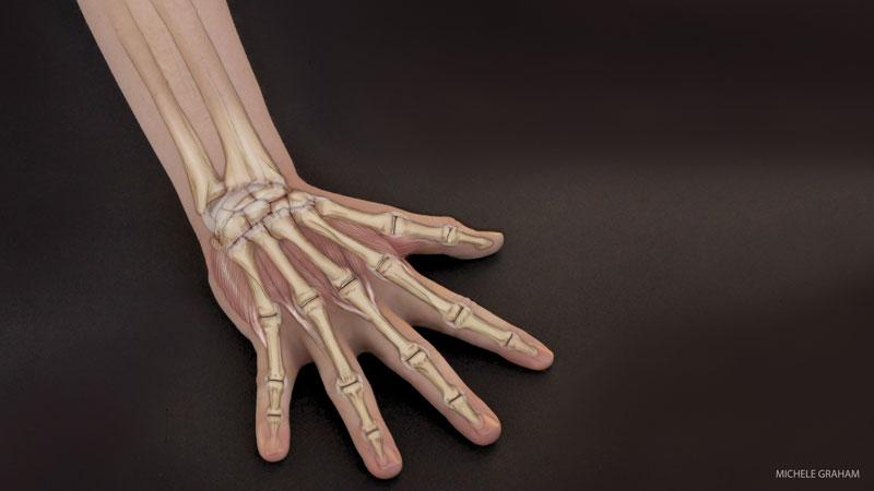 wrists  Как защитить запястья во время практики йоги:
