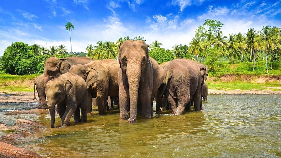 Йога тур на Шри Ланку со Светланой Мироновой  2 19 января 2020 г.: